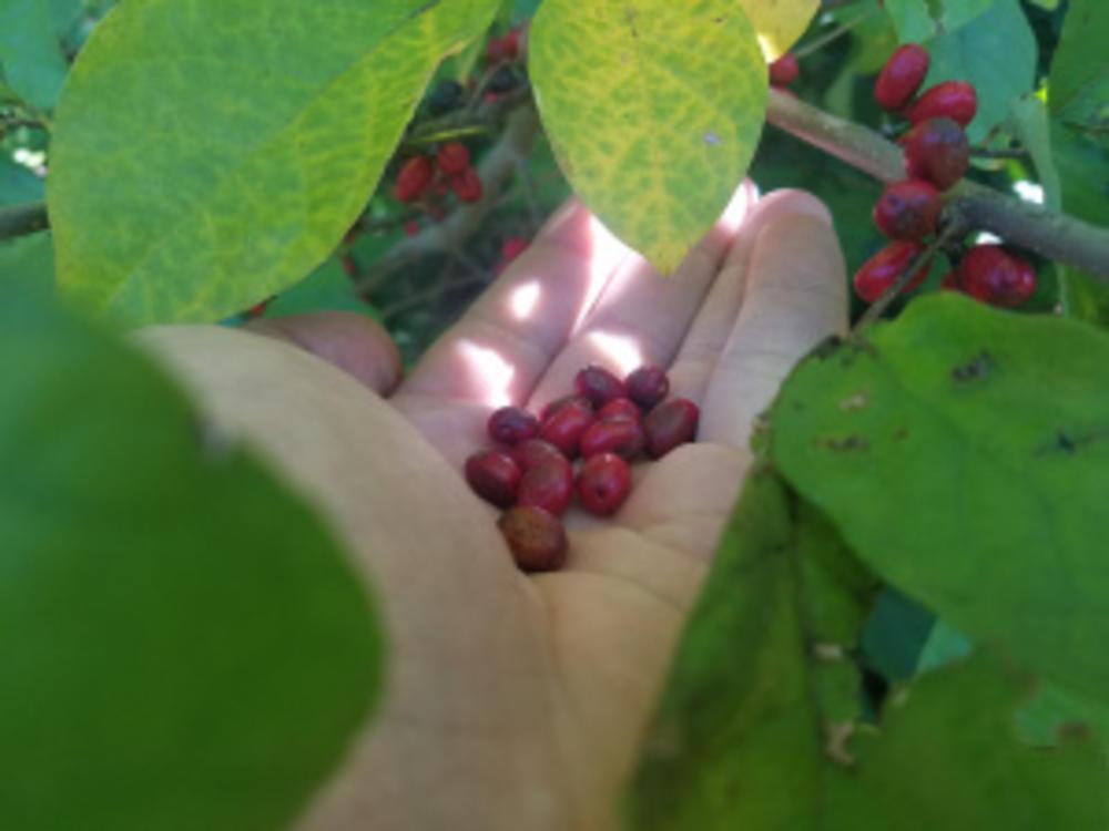 Jewel Seeds
