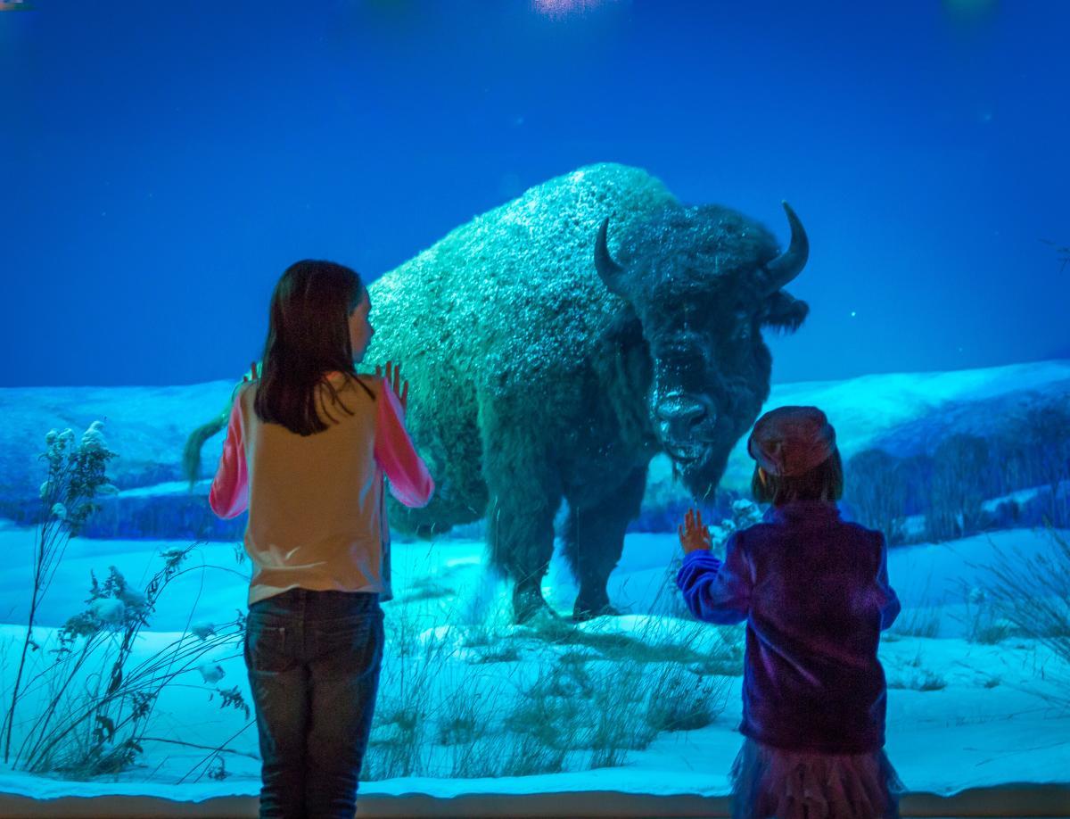State Museum of PA Mammal Hall Buffalo