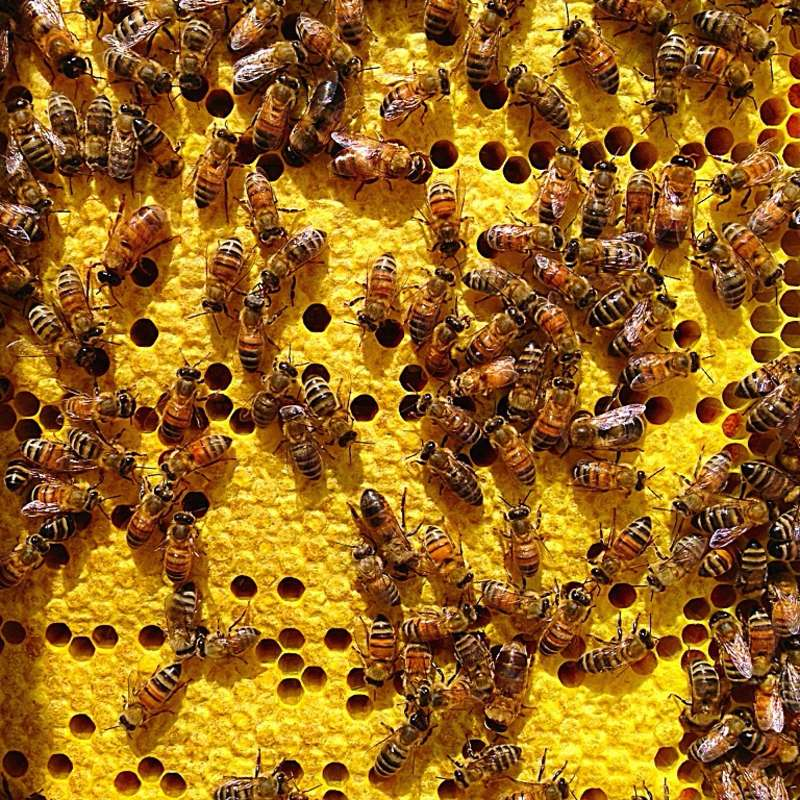 Hive of bees