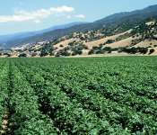 Salinas Valley: Scenic