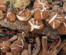 Mushrooom