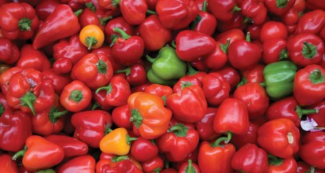 Fresh Peppers at Madison Farmers' Market