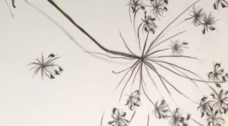 Botanical Drawing at Abington Art Center