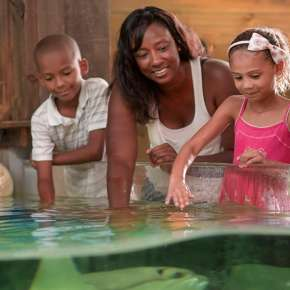 Pet the Stingrays at the Fort Wayne Children's Zoo