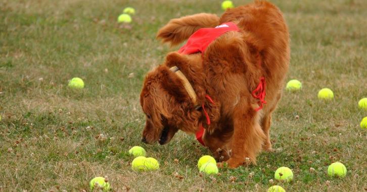Dog Days Of Summer  Brownsburg