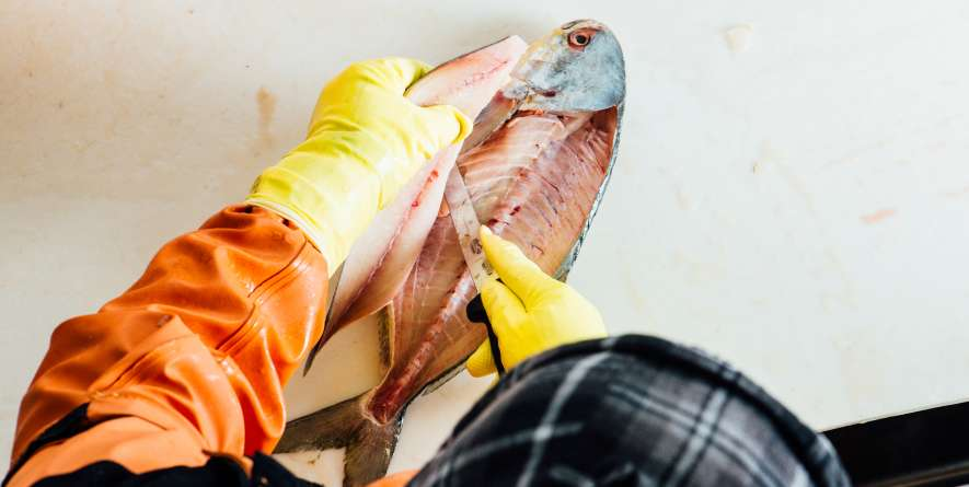 Filleting Fish