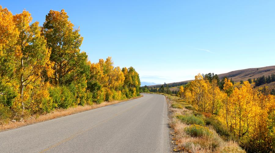 Virginia Lakes Road Fall Colors