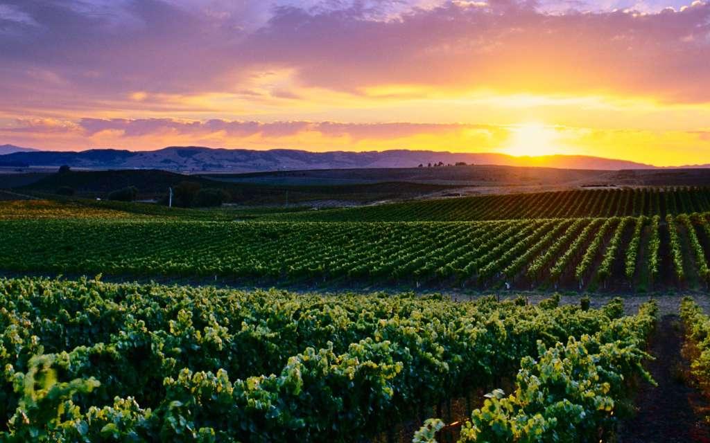 Napa & Sonoma Travel Advice & Recommendations | Viator