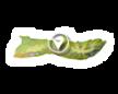 Fishponds of Molokai