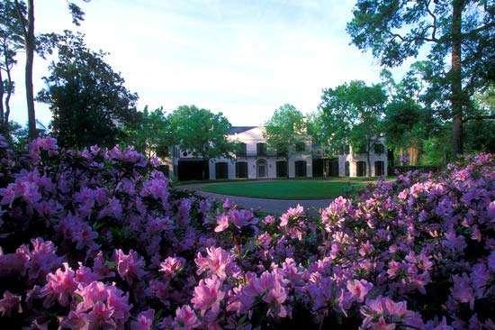Azalea Trail: Tradición de Primavera de Houston
