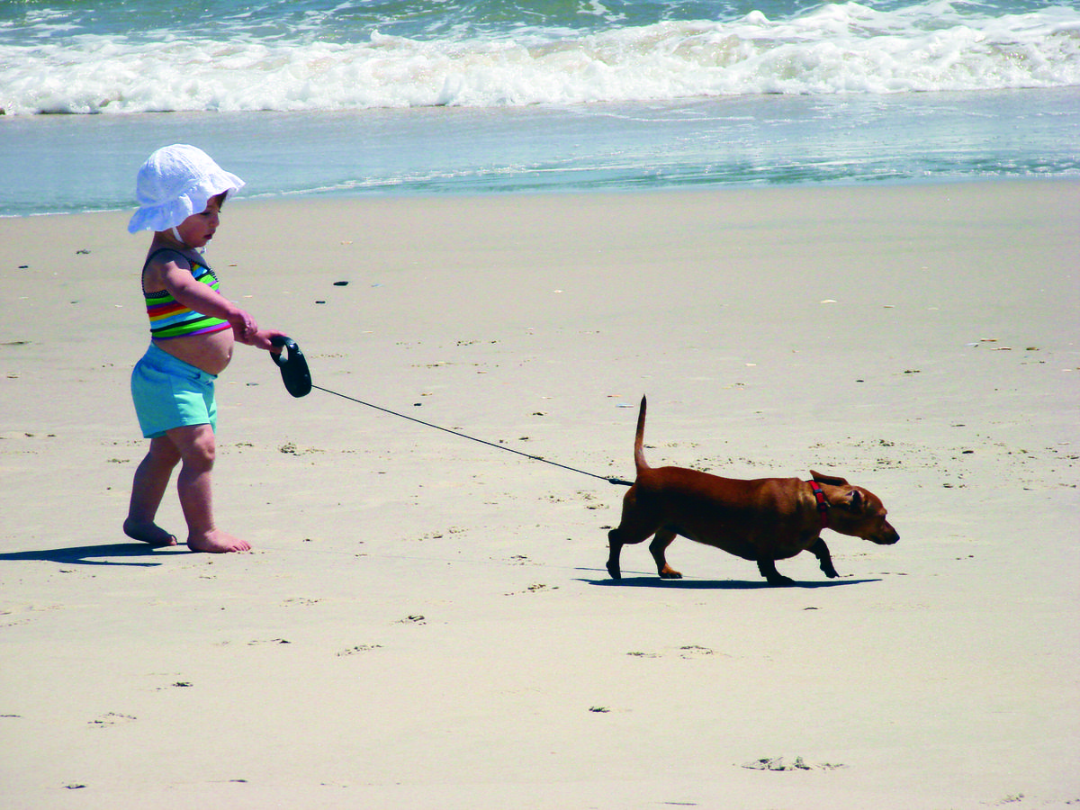 Pets On The Beach The Outer Banks North Carolina Dog