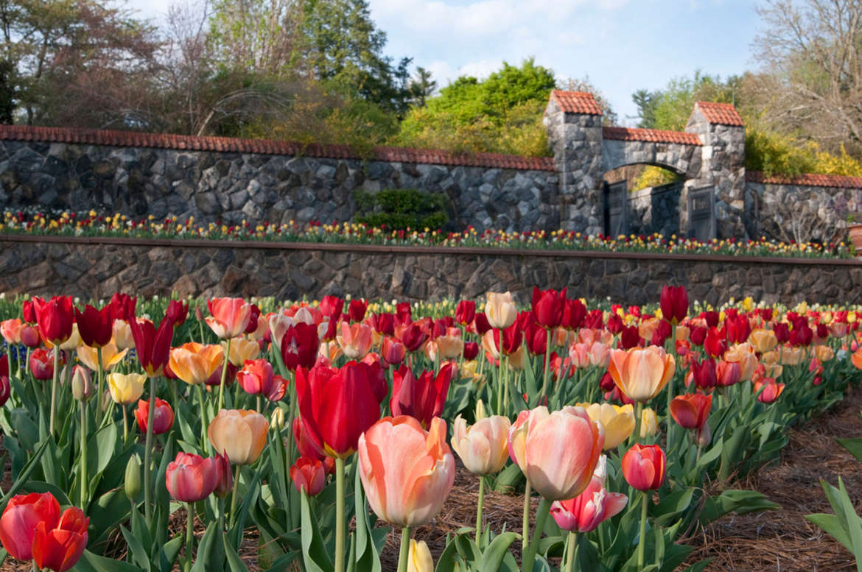 Biltmore Blooms Walled Garden