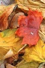 Tail End of Leaf Season
