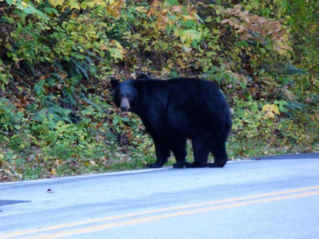 Photo of the Day: Even Bears Enjoy Fall in the Mountains