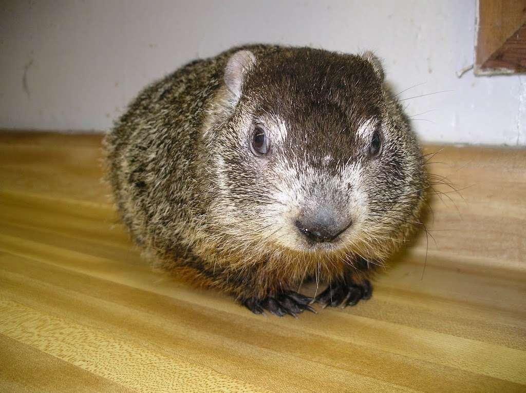 Asheville Celebrates Groundhog's Day