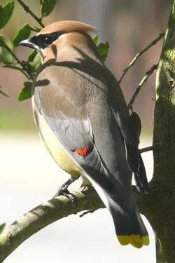 Bird Watching Near Asheville, NC