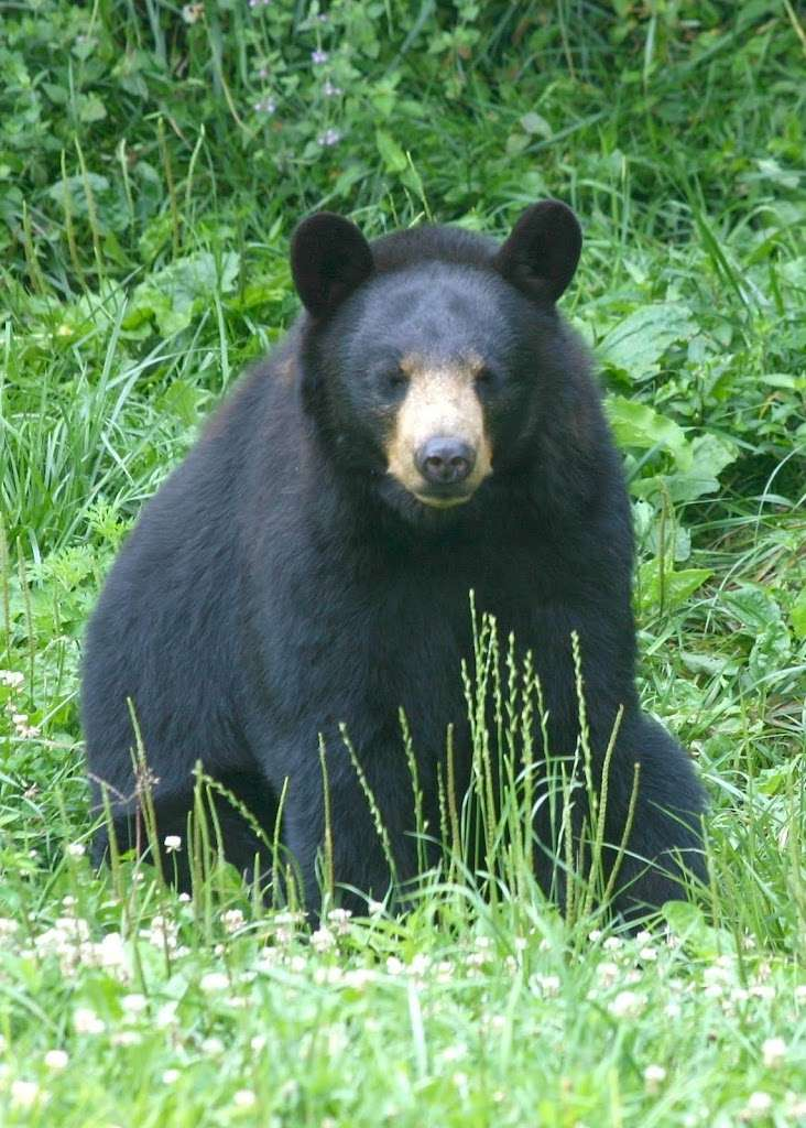 Bear Sightings Prompt Warning