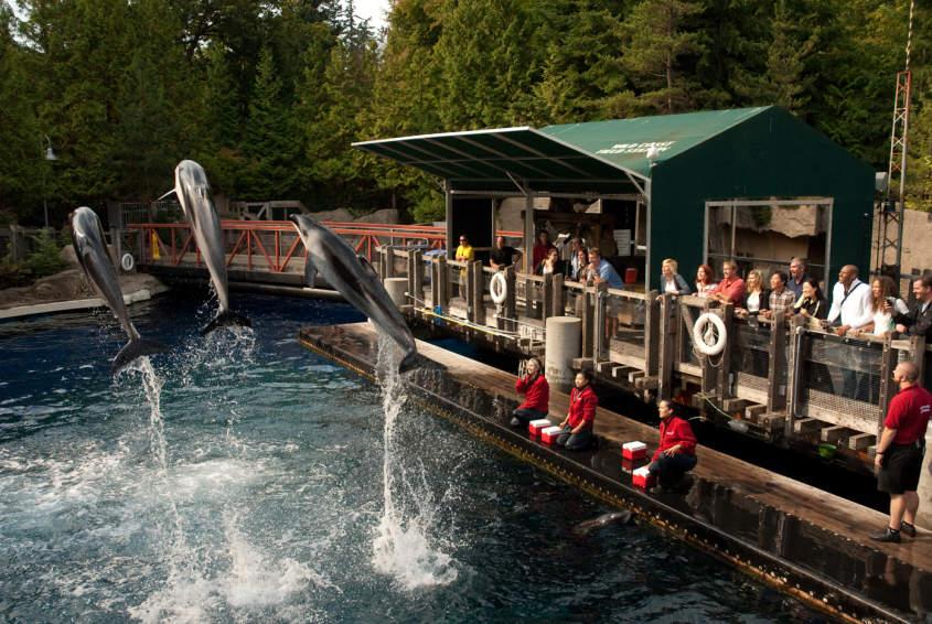 Stanley Park Attractions The Vancouver Aquarium