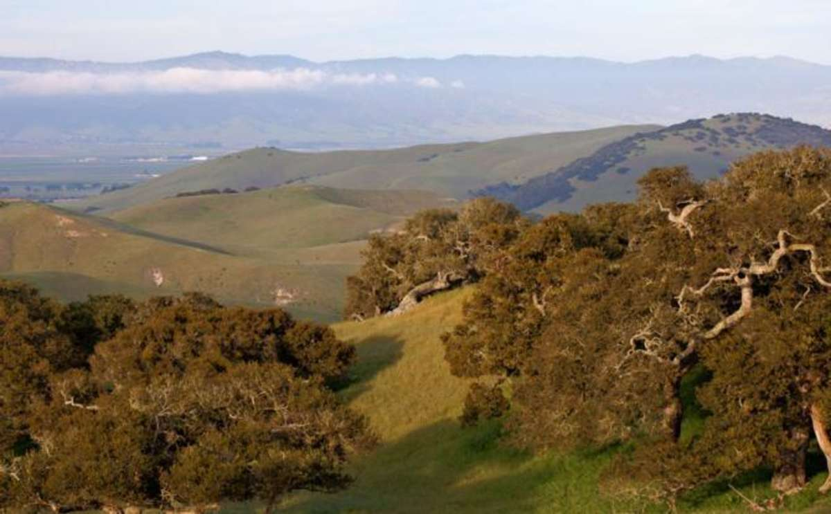 Fort Ord National Monument, Marina