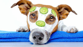 Virgin coconut oil is just as beneficial to your dog's skin as it is yours.