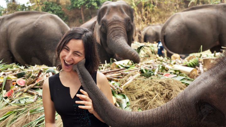 You could volunteer to help reintegrate elephants back into their natural environment on your next holiday to Thailand.