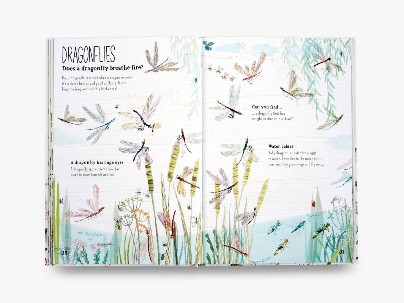 Thames & Hudson The Big Book of Bugs by Yuval Zommer