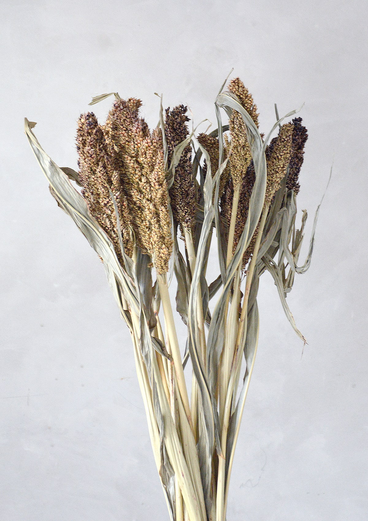 Little Deer Dried Natural Sorghum Grass / Seed Heads