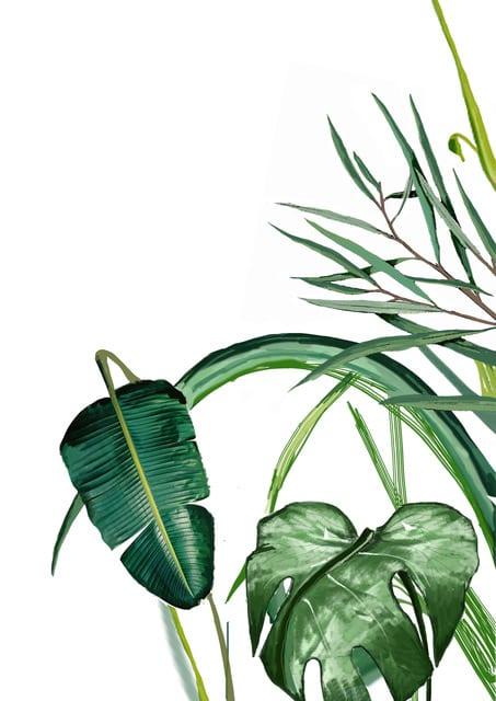 Room 356  Botanical Leaves Print A3