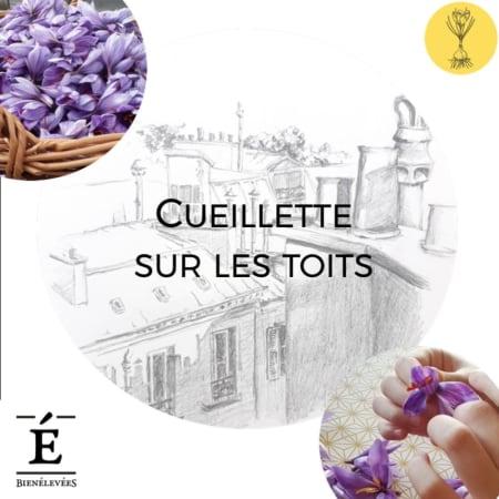Saffron Harvest Experience Paris