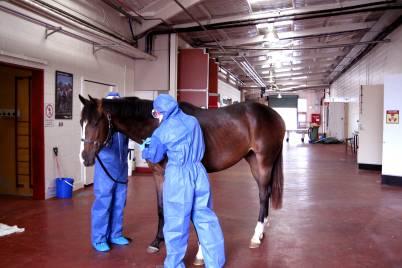 Vet public health horse hazmat