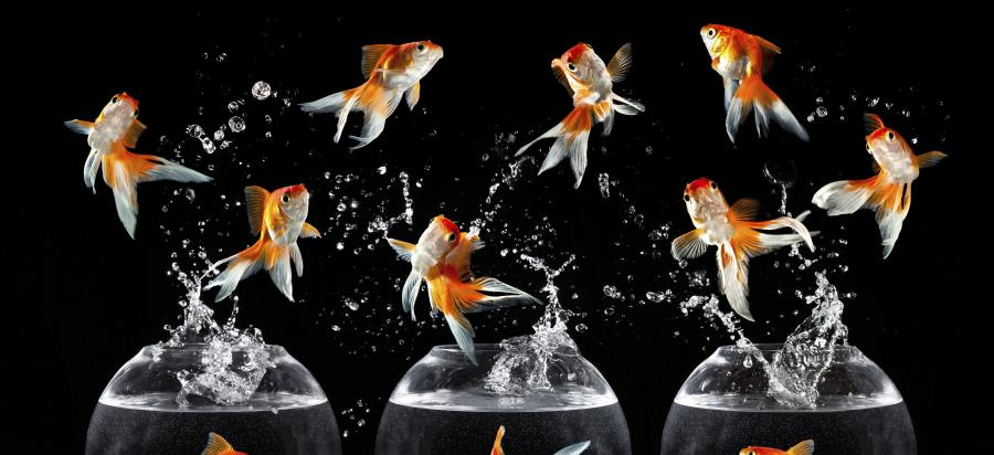 Meet the fish that hop, skip and jump | Pursuit by The