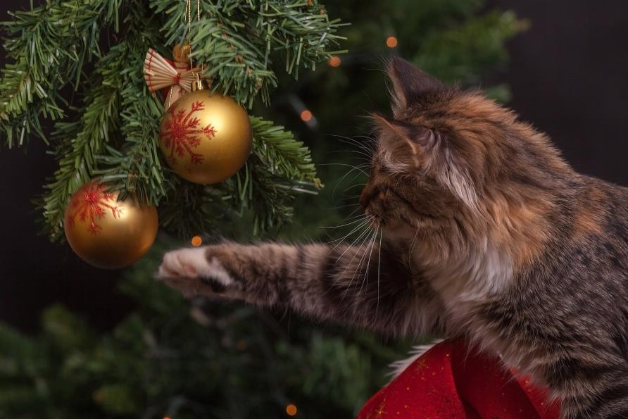 to a cat a christmas tree is one big playpen picture pexels - Are Christmas Trees Poisonous To Cats