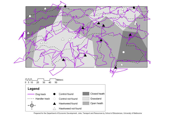 One trial in our January 2015 study, in which Missy (solid purple line) and her handler (dashed black line) search for hawkweeds through a mosaic of three vegetation types (grey background shading). Missy signalled on eight of the 21 hidden Hawkweeds, and two of the four non-hawkweed 'controls' or decoys. Only a full statistical analysis can reveal whether she signals on hawkweeds more reliably than on decoys. Picture: Cindy Hauser.