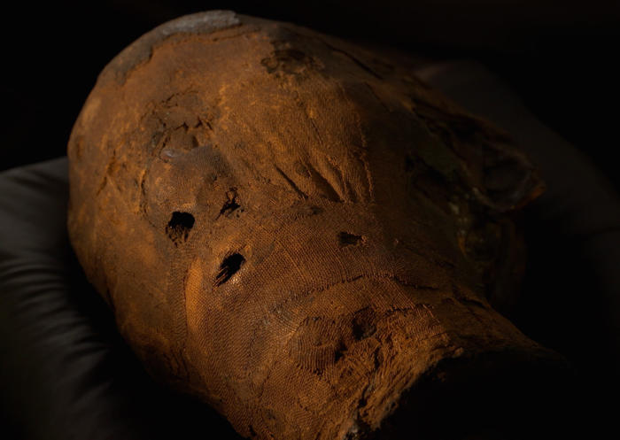 The mummified head of Meritamun, which is housed at the Harry Brookes Allen Museum of Anatomy and Pathology. Picture: Paul Burston.