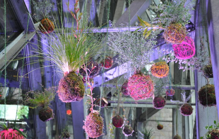 Hanging kokedamas made by workshop participants at Refugium, Federation Square, Melbourne. Picture: Linus Tan