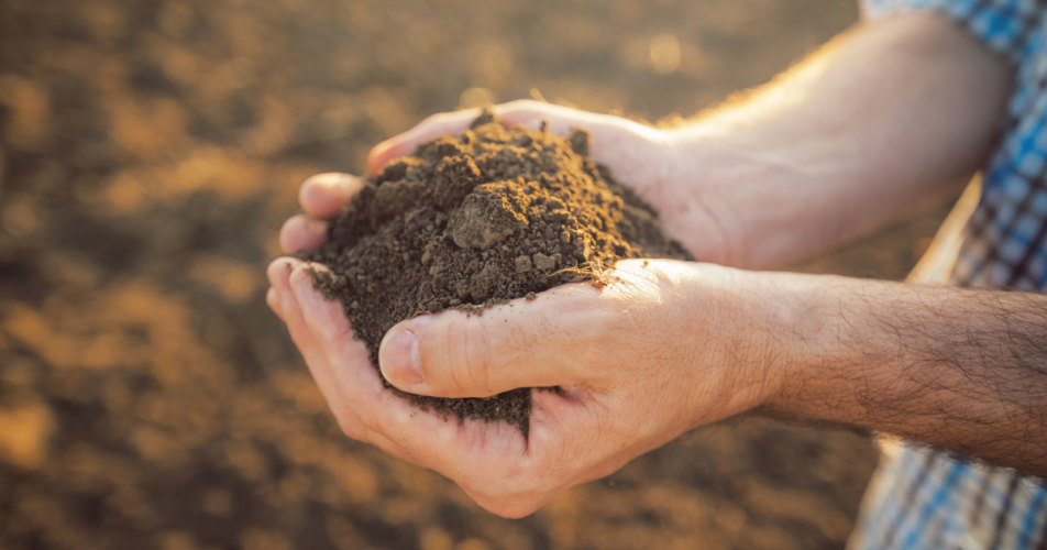Soils as Living Systems