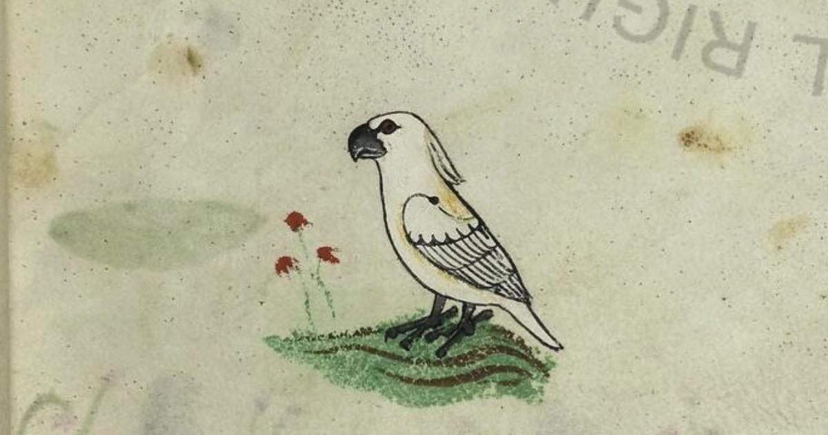 How did a cockatoo reach 13th century Sicily?