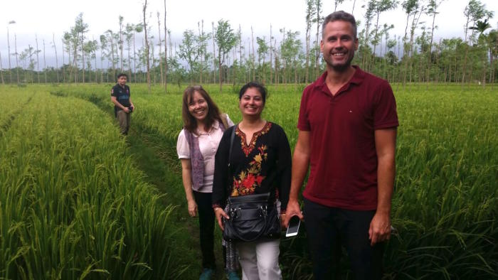 Rice biofortification researchers in an Indonesian rice field. From left to right: Conrado Dueñas (International Rice Research Institute), Inez Slamet-Loedin (International Rice Research Institute), Prabhjit Chadha-Mohanty (International Rice Research Institute) and Alex Johnson (University of Melbourne). Picture: University of Melbourne.