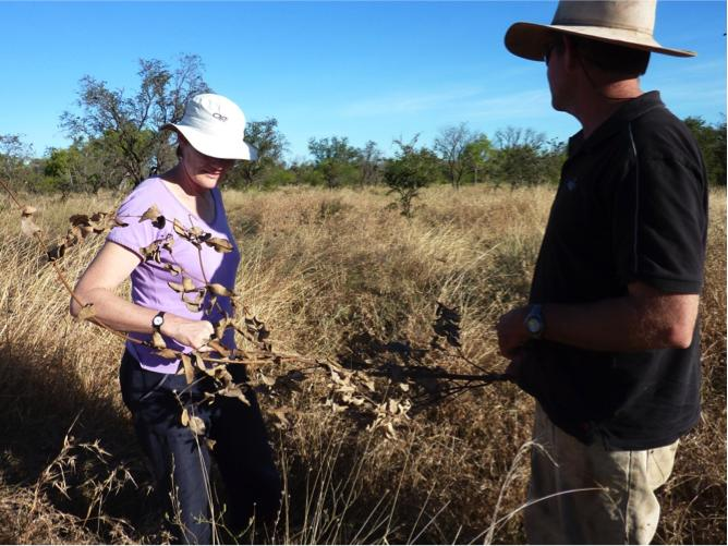 Professor Lesley Head in the field on a research project. Picture: Lesley Head