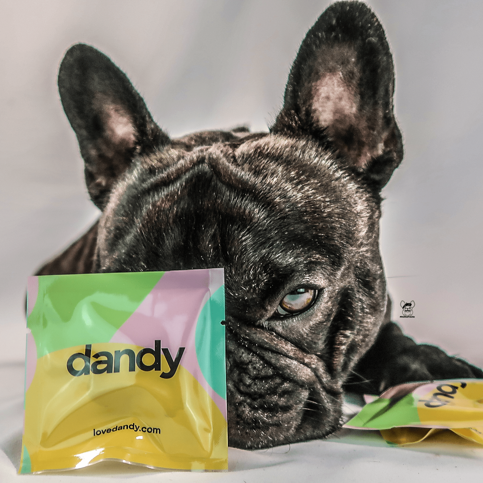 Pet Vitamin Supplementation Made Easy by Dandy