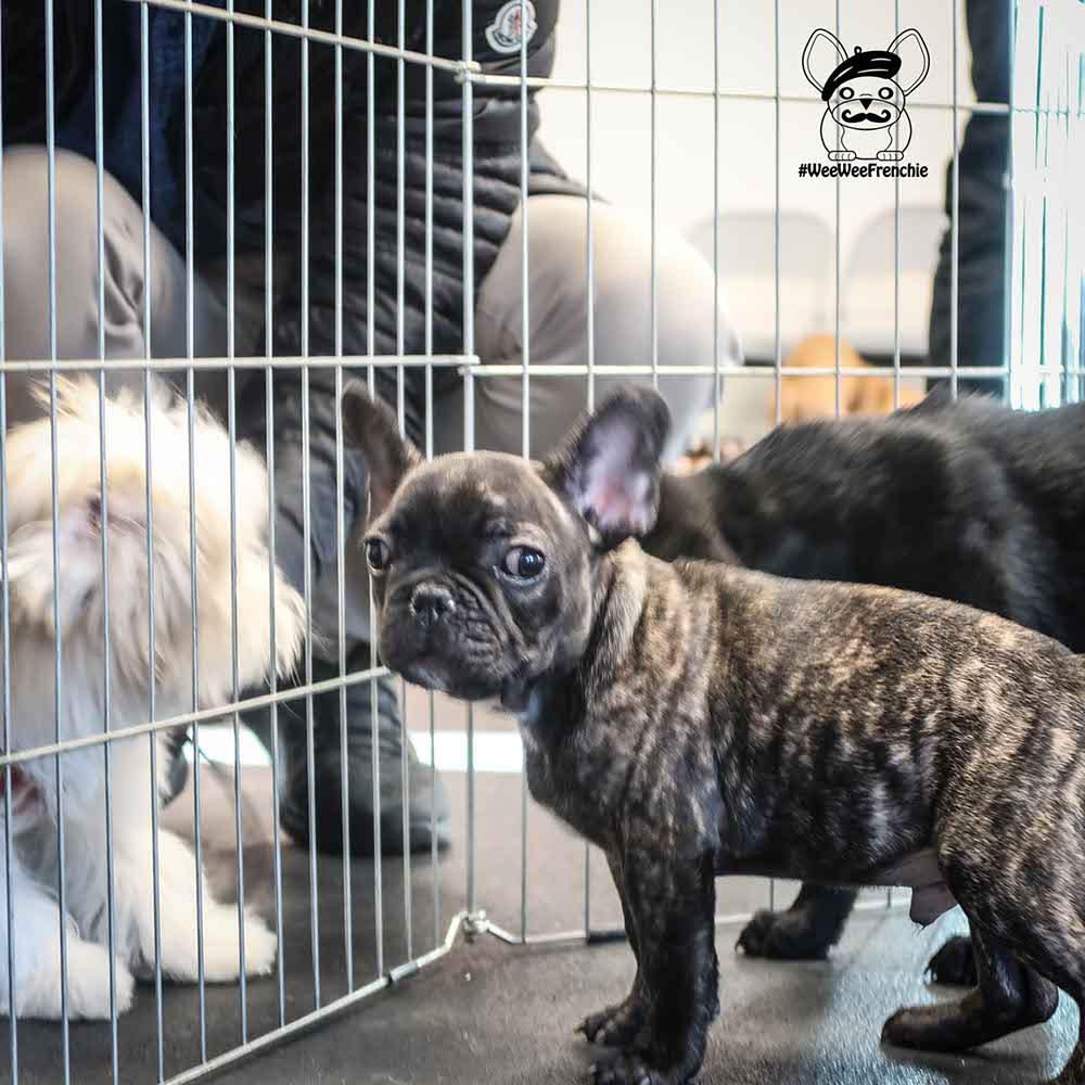 Puppy Classes Teach Life Skills