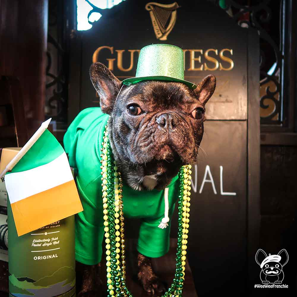 St. Patrick's Day Dog Attire