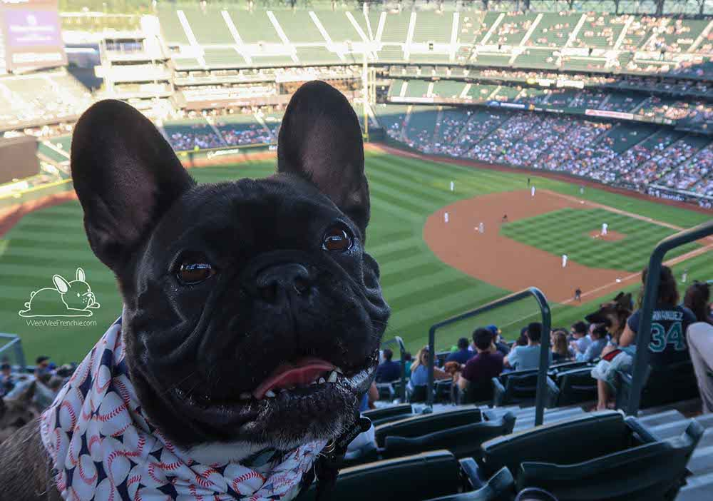 Take Me out to the Ballgame, Summertime Activities for Your Frenchie
