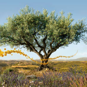 L'OCCITANE en Provence is Now Open