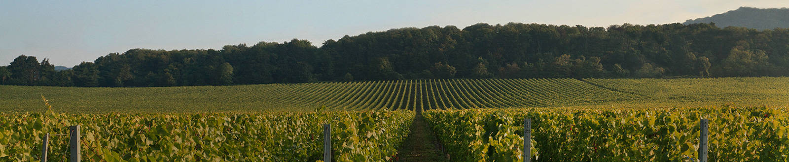Vineyards header banner