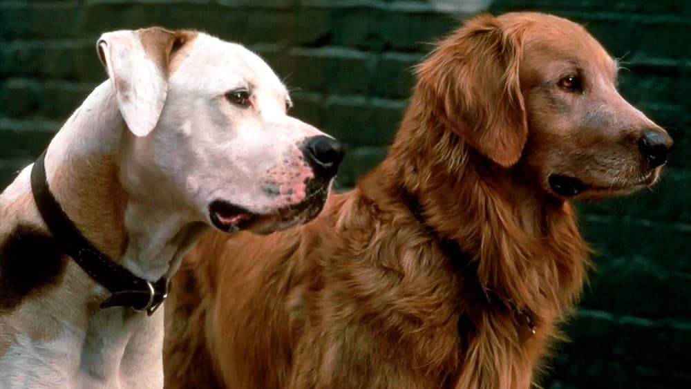 Our 20 favorite films about dogs